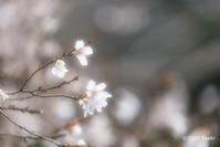 明日香初冬と早春 - toshi の ならはまほろば