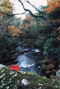 * ちいさな渓谷の秋 - わたしの時間