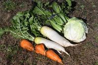 正月野菜 - 風のむろさん 自然の詩