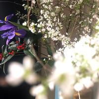正月の花2021 - ケチケチ贅沢日記