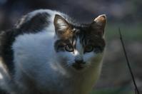 シマ - ネコと裏山日記