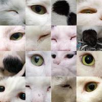謹賀新年と三回忌 - ぶつぶつ独り言2(うちの猫ら2021)