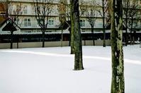 大変な一年でしたという賀状と雪上の光 - 照片画廊