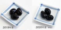 黒豆(新豆とひね豆) - Keiko's life style