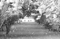 雪を撮ってみた20210102 - Yoshi-A の写真の楽しみ