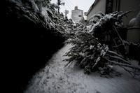 雪の古町#0120210102 - Yoshi-A の写真の楽しみ