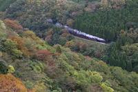 彩りの山に煙一筋- 2019年・山口線 - - ねこの撮った汽車