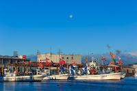 正月大漁旗とユリカモメ - やきつべふぉと