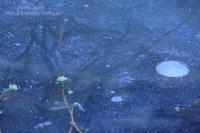氷中花 - 風の彩りー3