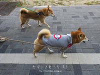 冬休みのアルバム「さんぽ初め」 - yamatoのひとりごと