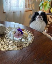 あけおめ☆彡2020年の犬体調と手作り食振り返り - 狆の茶々丸