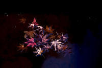 第950回   不動池の紅葉 - 湘南群青 -The sunset  blue -