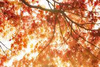 第951回    不動池の紅葉 - 湘南群青 -The sunset  blue -