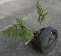 今年最初の - めざすはBONSAI いまは鉢植え!