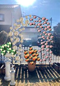 つるバラの誘引剪定♡ソフィーロシャス♫とブリーズパルファン^^ - 薪割りマコのバラの庭