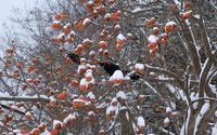 鳥たちの食糧事情 - へっぽこな・・