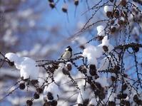 青空と雪と鳥さんたち。 - ヒロムシ君のお散歩日記
