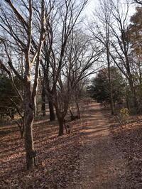 冬の雑木林 ~群馬県林業試験場~ (2020/12/28撮影) - toshiさんのお気楽ブログ