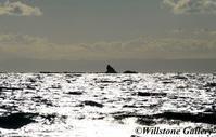 海の情景 - 花と風景の写真集_撮りたて花だより