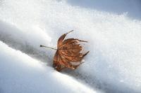 秋の忘れ物 - ささつぶ