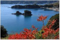 年明けの紅葉 - ハチミツの海を渡る風の音