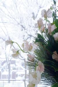 きょうからボチボチと花仕事(^^♪ - お花に囲まれて