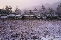天龍寺の朝 - Deep Season