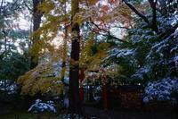 野宮神社 - Deep Season