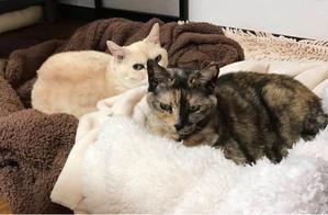 新年あけましておめでとうございます - 賃貸ネコ暮らし|賃貸住宅でネコを室内飼いする工夫