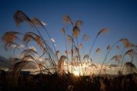 sunset -     ~風に乗って~    Present