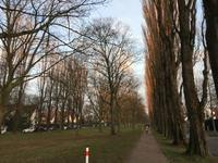 元旦の散歩と夕暮れのテニスコート - 毎日テニス(旧 Rudern macht Spass.)