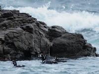 磯崎海岸 2021.1.5(1) - 鳥撮り遊び
