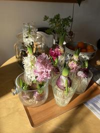 室内の花と緑〜ヒヤシンスとグリーン〜 - CROSSE 便り