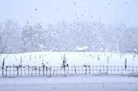 今週末は成人の日。 - 京都を中心に山口真一写真事務所は、七五三・お宮参りの記念撮影・年賀状用写真・ペット写真等、撮ります!