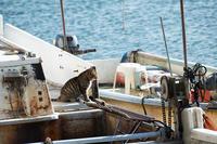 町角ニャンコ・2021年初猫撮り@堅田漁港其の一 - デジタルな鍛冶屋の写真歩記
