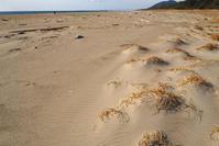 砂と植生 - Beachcomber's Logbook