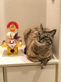 うちの長女と鏡餅 - Flying Kite@Japan!