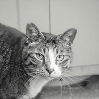 冬の猫 - モノクロ写真をアップする!