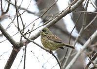 アオ・アオ・アオ - 写真で綴る野鳥ごよみ
