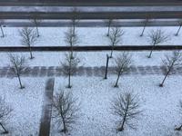 ほんのり雪、そして今日から規制強化 - のんびりgoing マイway