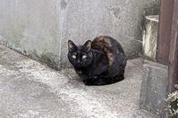 ★ サビ猫 - うちゅうのさいはて