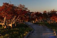 大台ケ原~朝日が注ぐ - katsuのヘタッピ風景