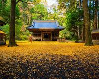 御殿場二岡神社のイチョウ - エーデルワイスPhoto