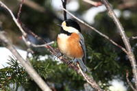 森のカラ達 - 今日の鳥さんⅡ