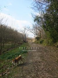 冬休みのアルバム「里山さんぽ」 - yamatoのひとりごと