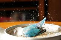 水浴びB.Bの記録(12月29日) - FUNKY'S BLUE SKY