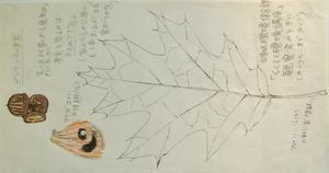 #ネイチャー・スケッチ #Naturejournal #sketch #Watercolo #水彩画 #植物 -