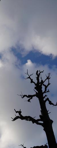 【体調記録】2021/1/7(木)寒い((( ・Д・)))ブルブル - 太陽に嫌われた母ちゃんの色々