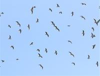 三番瀬海浜公園探鳥会は、中止になりました。 - さいたまの野鳥
