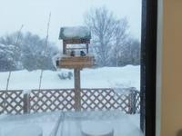 稚内は吹雪模様 - 北海道中央NOSAI 宗谷支所 非公式 ブログ